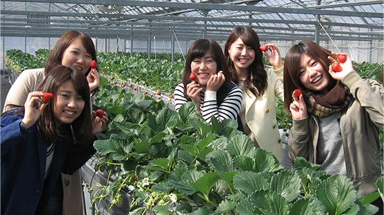 小豆島ふるさと村いちご園
